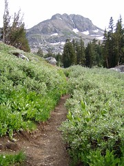 20030730 Trail to Winnemucca Lake