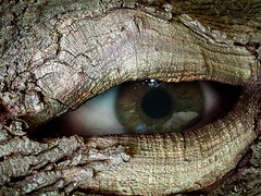 Tree Ent (Chris A. Campbell) Tags: iris tree eye composite photoshop perfect bark eyeball fairmount oneyear knothole swisharoo repixel