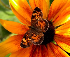 Rymes with Orange (Mr. Physics) Tags: park flowers red orange brown flower macro nature closeup fauna butterfly catchycolors garden photography photo flora colorful pix close moth pic msoller