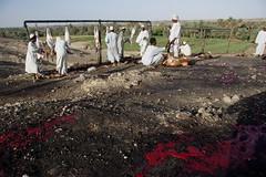slaughtering at suq salamat 1 (David Haberlah) Tags: manasir mainland suq salamat sudan fourth nile cataract 4thcataract tribe relocation daralmanasir