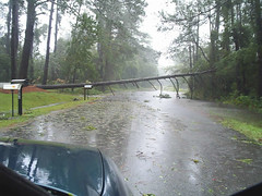 tree down (wwaytv3) Tags: ophelia