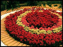 Holambrö (Tay) Tags: flores flor tay nascimento holambra tayana taynascimento tayananascimento