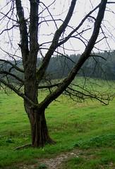 Dead trees (:Linda:) Tags: wood tree green forest germany landscape dead village herbst meadow thuringia september baum baretree frühling frühjahr autumntree lumberpile treesinspring bäumeimfrühling nackterbaum