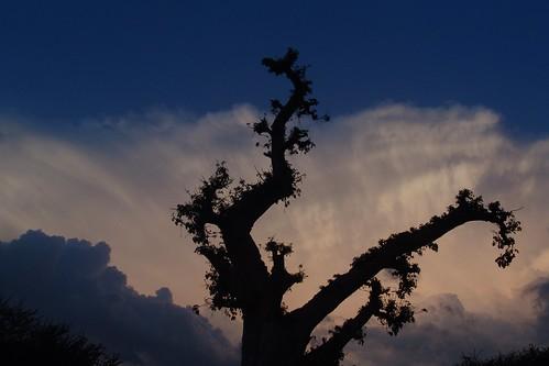 Sunset, Barentu 5