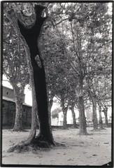 holle platanen 1 (Karel Brits) Tags: france holle platanen platanus hollow tree