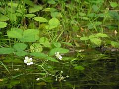 ophelia (Sergio Dimartino) Tags: green reflections waters ponds mv fontanile