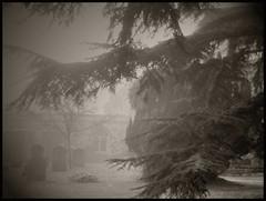 mistychurchyard (achuka) Tags: churchyard mist hailsham