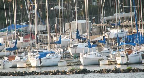 sailboats cruise reservoir mississippi