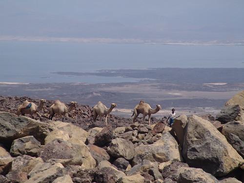 Afar salt caravan, Lac Assal
