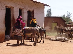 Women with donkeys (CharlesFred) Tags: africa countryside african somali dailylife ethiopia afrique ogaden babile