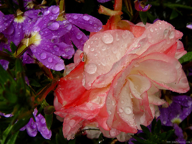Flowers After Rain