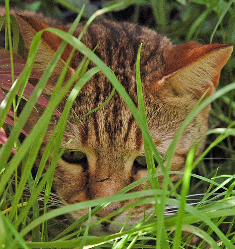 Iggy in the grass