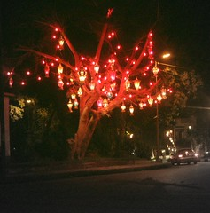 Ramadan Tree (mnadi) Tags: light tree lights glow islam traditional egypt cairo lanterns local lantern tradition ethnic ramadan  maadi fanoos  ramdhan fanous
