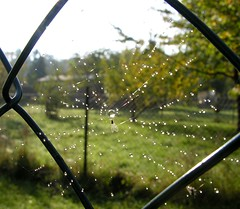 Spider web with prey (:Linda:) Tags: autumn reflection tree nature water fence germany garden insect fly october village herbst natur spiderweb drop thuringia dewdrop cobweb valley droplet spinne prey chainlinkfence zaun insekt reflexion garten baum autumnal spinnwebe wassertropfen tropfen bauerngarten vegetablegarden rhomb gewinner werra cottagegarden tröpfchen metalfence metallzaun henfstädt maschendrahtzaun wiremeshfence herbstlich meshfence gemüsegarten ruralgarden chickenfence vonausennachinnen natureisthewinner natureiswinning