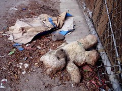 Abandoned Bear (See El Photo) Tags: bear street 15fav abandoned trash 510fav fence found lost nice sad teddy great ground 10f dirty explore teddybear 100views tlpoedeleted excellent greatshot lone ontheground 3f 800views 1000views emote 4f 1f lonley faved leftbehind fench 1015fav notabeaver 17f 2f 555v5f 333v3f 222v2f 444v4f 111v1f 19f 777v7f 900views 888v8f 666v6f explore150