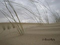 Elbr (Đó£Pђ!ŋ) Tags: ilikegrass