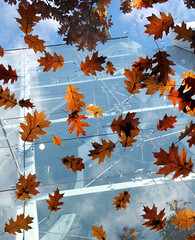 Fall. (Robin Thom) Tags: blue canada deleteme4 fall glass leaves topc25 topv2222 vancouver wow cool topf50 bravo bc seasons savedbythedeletemegroup quality topv1111 been1of100 interestingness1 frombelow saveme10 topv5555 most 500v50f top10 topf150 topv3333 topv4444 tp 4autumn topv7777 7777v77f 8888v88f 5555v55f 4444v44f 9999v99f 1500v40f favcol urbannatureblog 11111v111f been1of100x2 exploretop20 frhwofavs