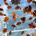 Fall. par Robin Thom