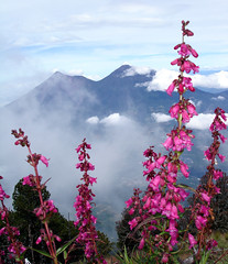 Volcn de Agua Summit, near Antigua Guatemala (Bryan-Long-Photography) Tags: travel people tourism de agua maya guatemala hike tourists ox antigua backpack indians volcanoes indigenous volcan guatemalan volcn mayans