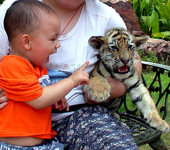 """Two Little Precious Tigers..."" (China Lost and Found) Tags: china baby cat nikon d70 tiger kitty magicmoment cutekitty babytiger beautifulshot cuteinnocencekid chinalostandfound"