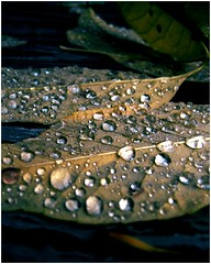 Fall without you (II) (Elinesca) Tags: fall autumn poetic love rain raindrops fv10