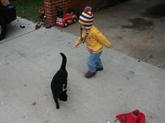 leo and jinx (jenworrells) Tags: leo cat jinx worrells