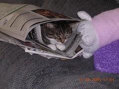 DSCN2034.jpg (mrapplegate) Tags: stinky cats family