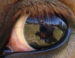 eyeing me, eyeing you (quicklykissme) Tags: show horse reflection eye me dante duke eyeball top20horsepix hosted purge 103005 notpicked scoreme