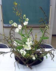 Spray (monchi6688) Tags: japaneseflowerarrangement flowerarrangement flower flowers  ikebana  sogetsu