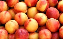 Massor av mogna persikor