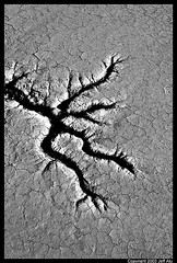 escape (Jeff T. Alu) Tags: dry lake mud cracks desert hot black white phototoshop digital surreal moody lonely dark outdoors bleak blackandwhite deserted illusion zen medetation medetate power impact graphic doom bright earthy dirt gritty intense visionary heat passion 4x4 remote california desolate dreamy nightmare euphoric