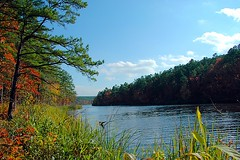 cedar lake with tall grass - by DanielJames