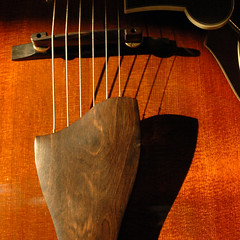 guitar - November light (kowchas) Tags: guitar archtop