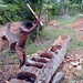 Canoe Making from Mango Tree
