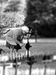 """I love you, Douglas MacDonald"" (Wyrd) Tags: remembranceday soldiers memorial poppies iloveyou bw blackandwhite womenonly great great2 great3 great4 great5 great6 great7"