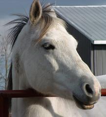 Просто красивая лошадь