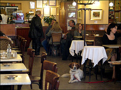 Happy Furry Friday (widderson old school + still censored) Tags: vienna wien people dog chien sterreich caf restaurant austria sterreich cafe women afterwork hund bluehour furryfriday talking widderson oesterreich interiour braunerhof stallberggasse utatadines