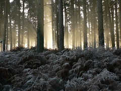 Winter Dawn (johnmuk) Tags: autumn winter tree nature ilovenature cannock ding staffordshire johnmuk topphotoblog
