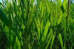 maraña de verde