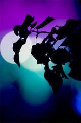 (α) Tags: night