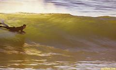 Jetty1025B (mcshots) Tags: usa california socal southbay jetty surfer bodyboarder hyser ken talent ocean waves surfing friend boogieboarder mcshots