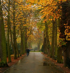 Walk in the Park (fxdirect) Tags: sweden rain malmo malm park cemertery leaves trees autumn 510fav fv5 umbrella 1025fav