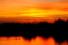swan sunset (algo) Tags: sunset sky orange water yellow clouds photography topf50 bravo gutentag quality topv999 reservoir swans topv777 algo tring startops 600v60f