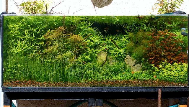 Acuario rebosante de vegetación