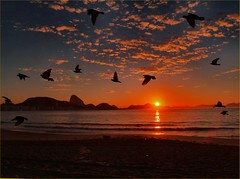 Birds at Sunrise, Capacabana Beach, Rio (Sam's Exotic Travels) Tags: brazil beach rio brasil sunrise de sam sams travelphotos janerio saveit saveit2 saveit3 saveit4 saveit5 saveit6 saveit7 saveit8 saveit9 saveit10 savedbythedmusunscapesgroup capacabana samsays samsexotictravelphotos exotictravelphotos samsayscom