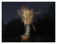 Vase (It'sGreg) Tags: weeds puttheweedsintheboot putthebootonaflowerpot turnontheflashlight alsoworkswiththelimeandthecoconut arsonboots