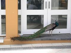 More wildlife at Rottnest Is (Princess_Fi) Tags: westernaustralia rottnestisland