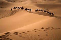 L'erg Chebbi - randonnée dans le désert (mgirard011) Tags: meknèstafilalet maroc ma afrique ergchebbima lieux randonnées dune sable désert paysage lpconnect greatphotographers 600faves