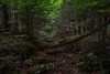 DSC_0501 (JN_Tetreault) Tags: trees water forest landscape woods nikon rocks outdoor connecticut ct funday waterfalls daytrip newthings nikoncamera deepinthewoods d7100