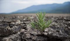 Renacimiento (Susie Palermo G) Tags: desolacin laguna seca sayula